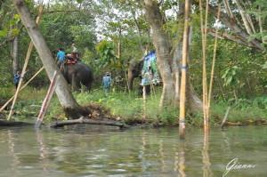 Trekking in elefante