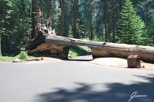 Come si passa sotto un albero caduto?