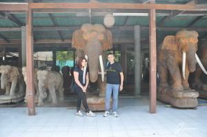 Elefante e turisti