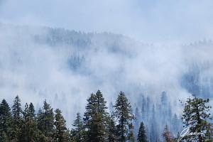 Fumo tra le sequoie niente paura sono fuochi controllati dai rangers