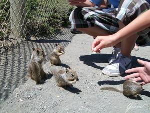 Vietato dar da mangiare agli scoiattoli....