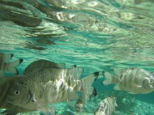 Pesci al pascolo