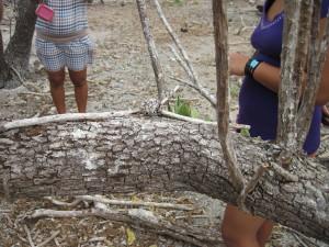 L'isola degli uccelli - Nido da equilibrista