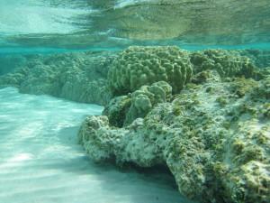 Scogli di corallo