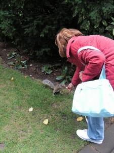 Lo scoiattolo di San Paolo