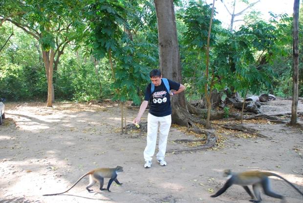 Le scimmie a Ghede