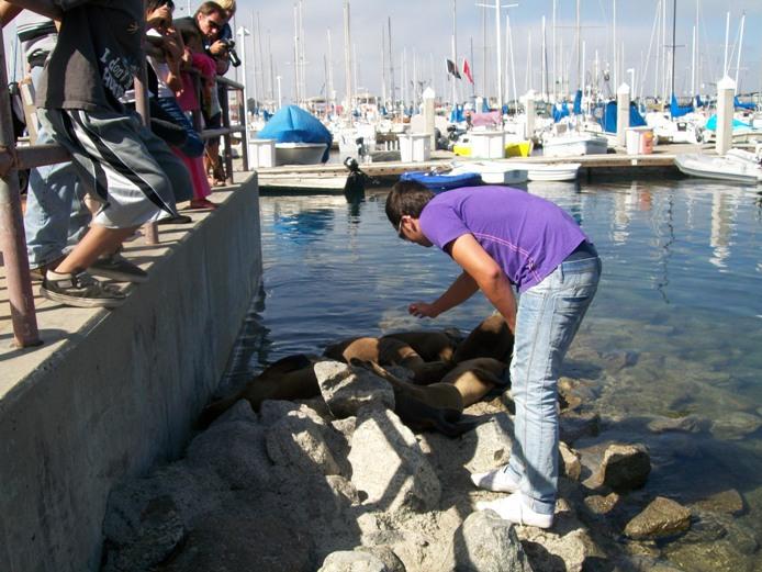 Manuel e le foche a Monterey