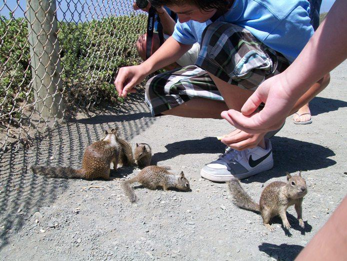 Tanti scoiattoli!