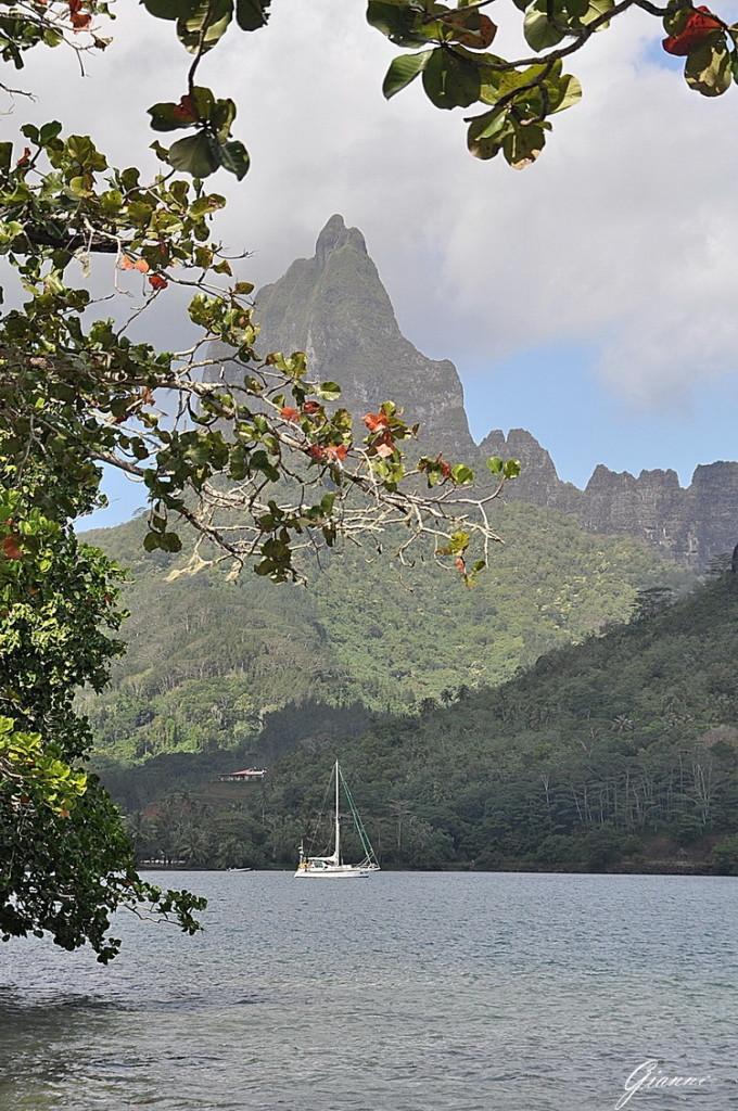 Polinesia - Baia di Cook