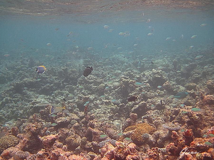 Snorkeling al largo