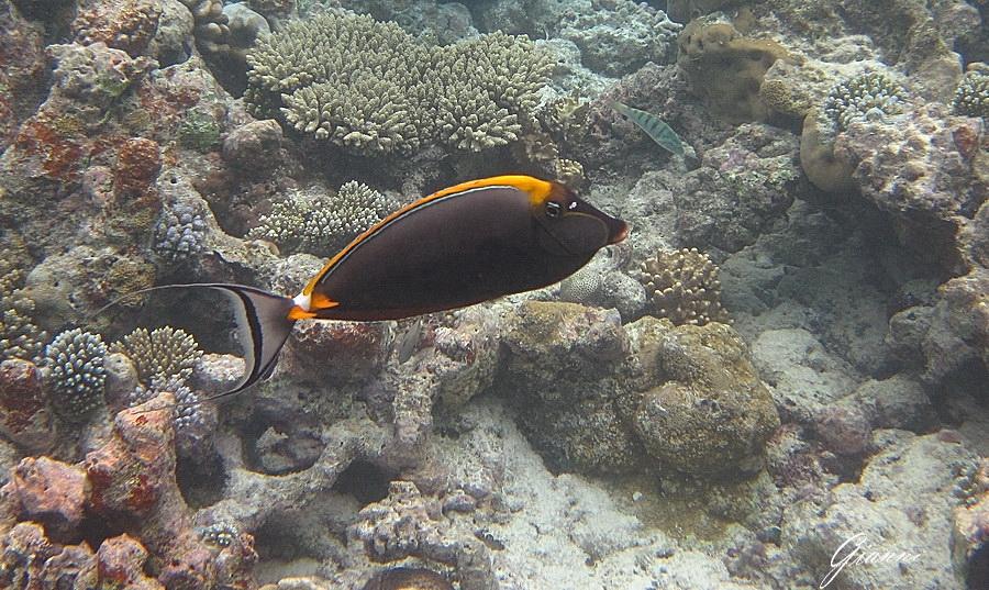 Coralli e colorati pesci