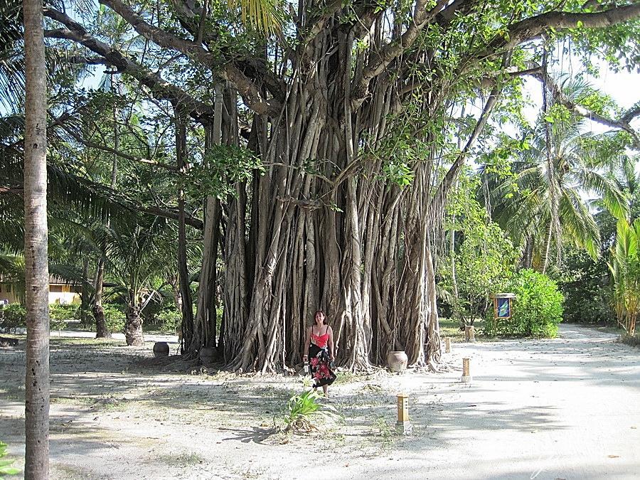 Un albero centenario