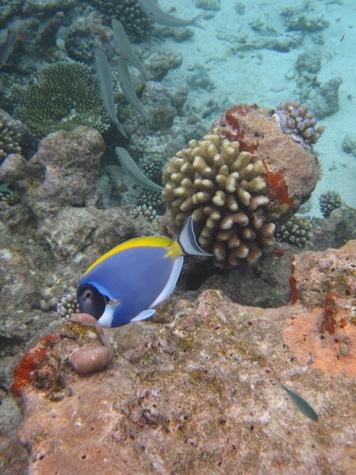 Snorkeling alle Maldive