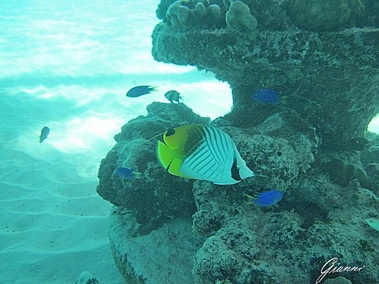 Snorkeling sotto la camera...