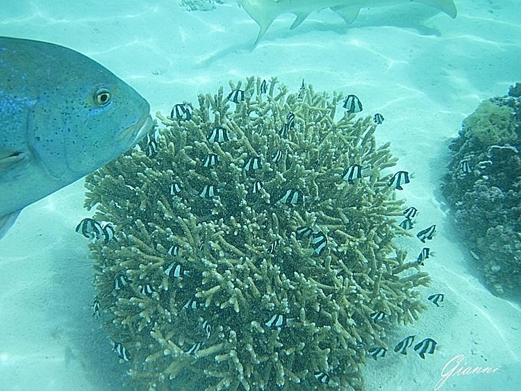 Coralli al Lagoonarium