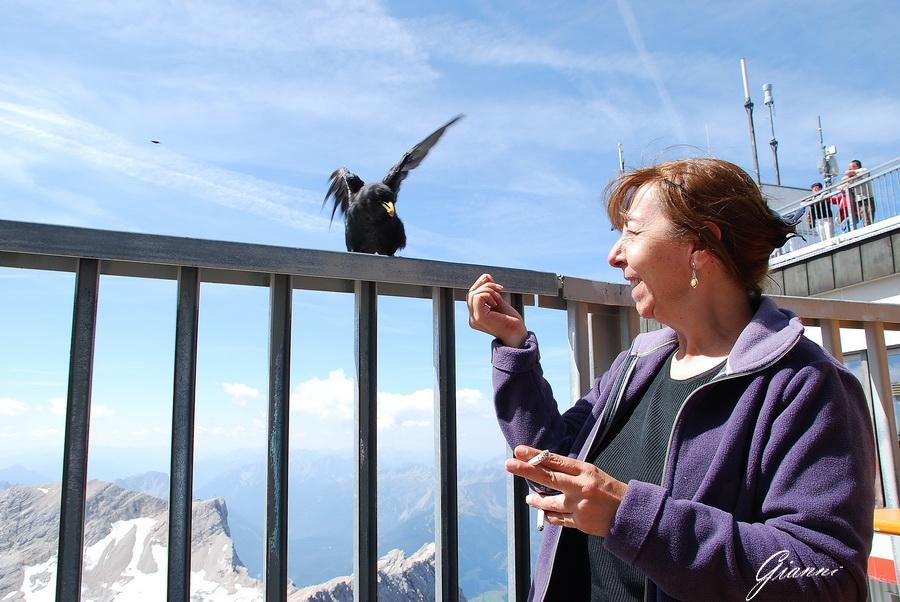 Zugspitz - Pranzo con il corvo...