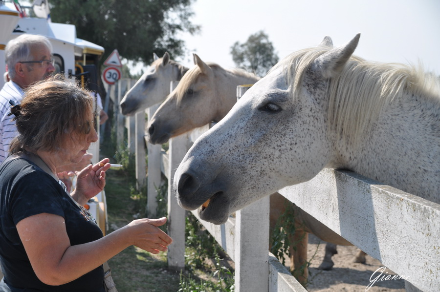Saintes Maries de la Mer - I cavalli bianchi