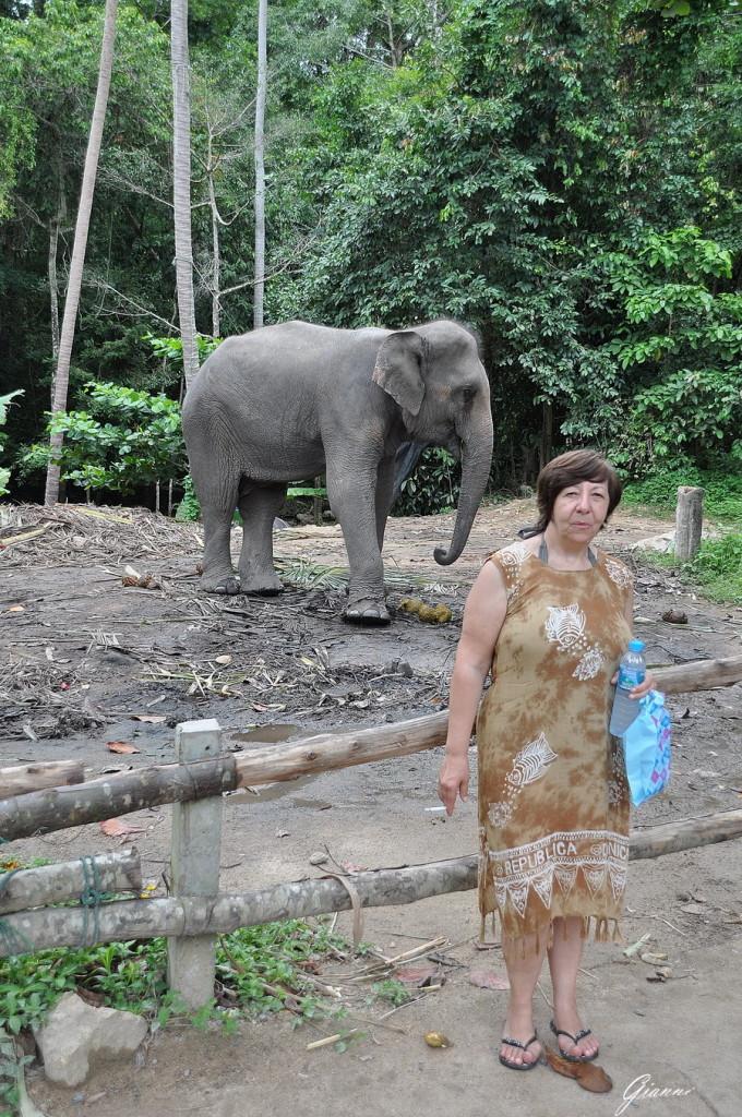 E come sfondo... un elefante