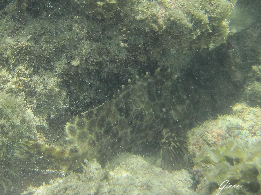 Pesce timido