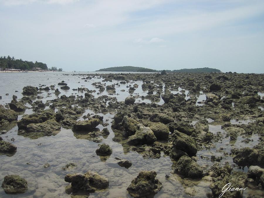 Un isola di corallo morto