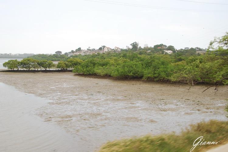 Mangrovie e bassa marea
