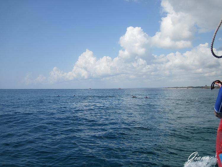 Safari Blu - I delfini