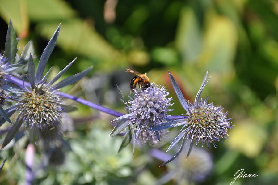 Un ape al lavoro