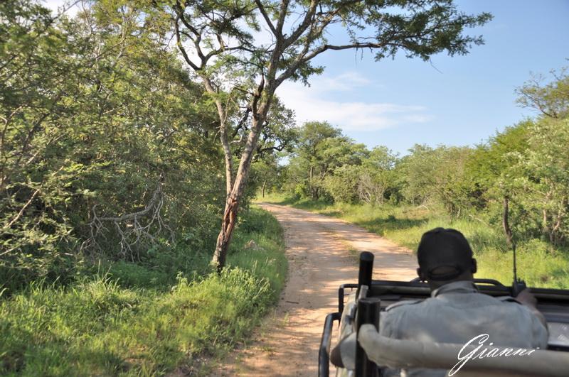 Safari in corso