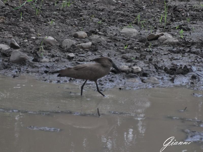 A caccia nel fango