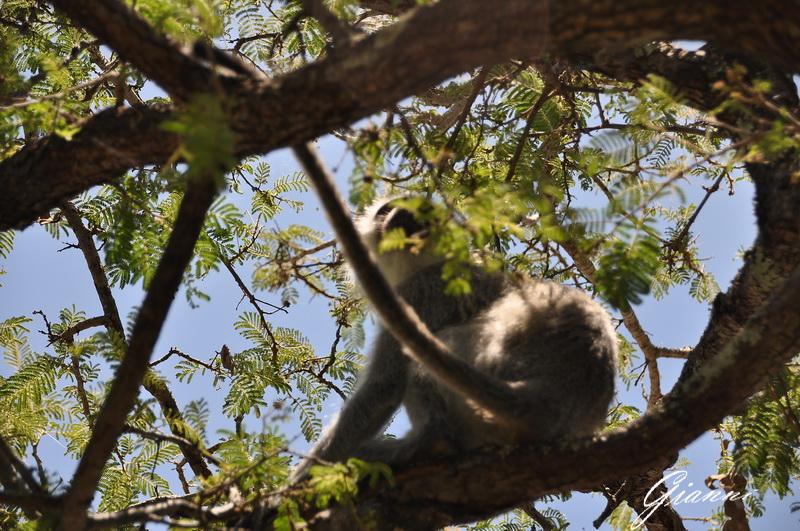 Scimmietta sull'albero