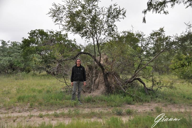 Gianni e il termitaio