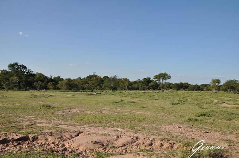 Vuyani Safari