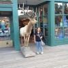 """Un """"piccolo"""" cervo"""