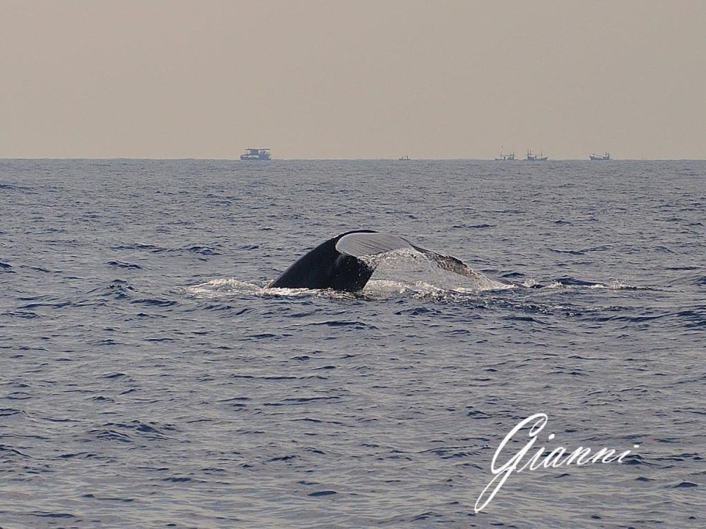 Balena a Mirissa