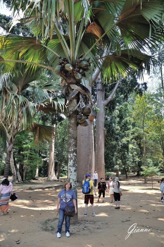 Orto Botanico di Kandy