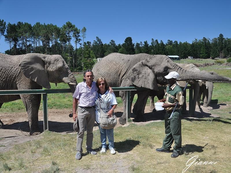 Elefanti nel rescue