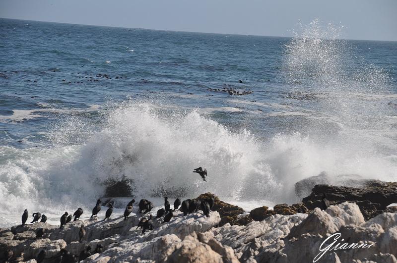 Schizzi dall'oceano