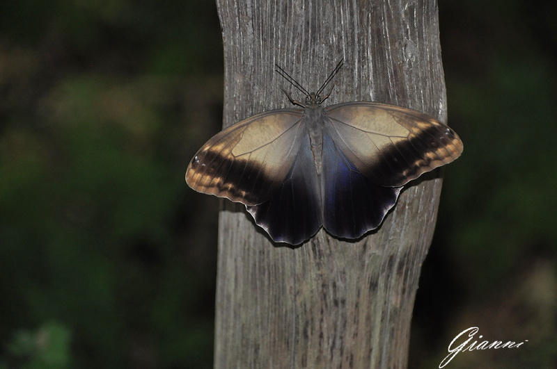 Farfalle a Butterfly World