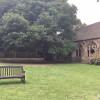 Oxford - New College - L'albero nel chiostro