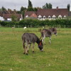 Stratford upon Avon - Mary Arden's Farm