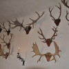 Trofei di caccia