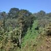 La foresta intorno alla caldera