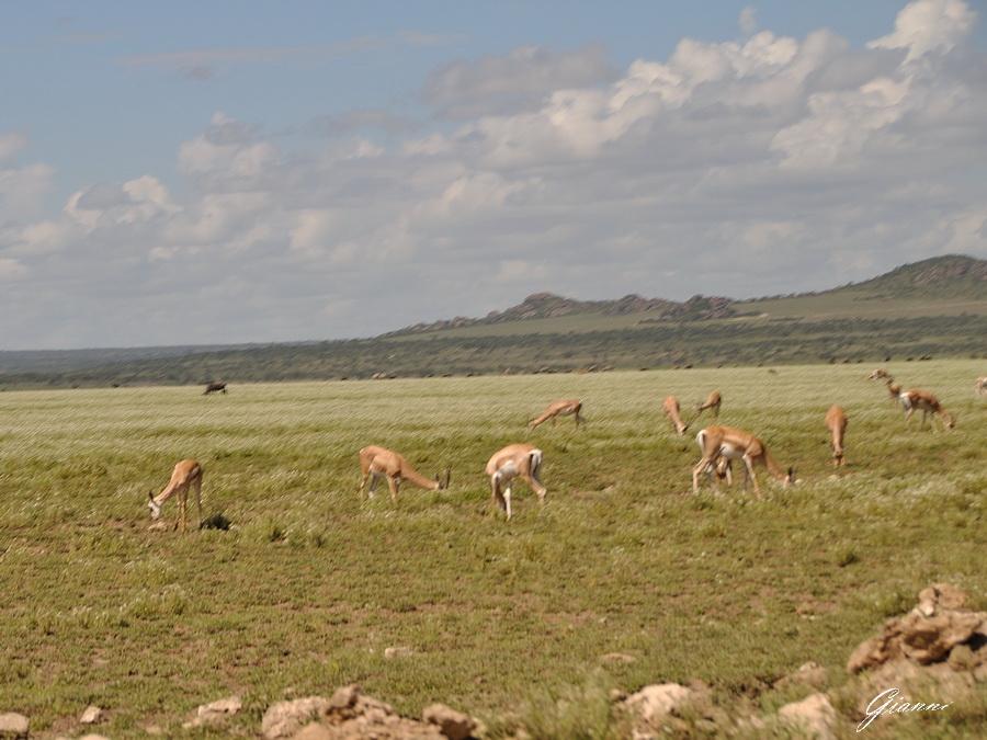In jeep verso il Serengeti