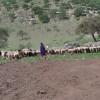 Pastori masai