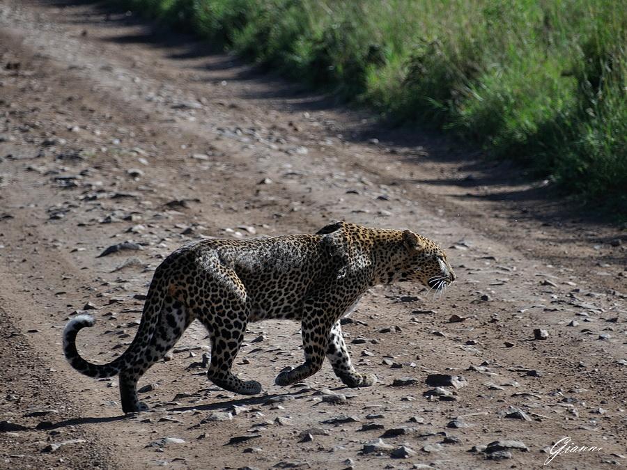 Mamma leopardo e i suoi cuccioli