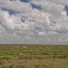 Serengeti - Gazzelle