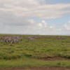 Serengeti - Mandria di zebre