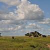 Serengeti - Come un isola in mezzo al mare d'erba