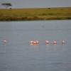 Serengeti - Fenicotteri