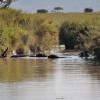 Serengeti - Ippopotami a mollo